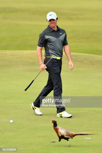 Rory McIlroy of Northern Ireland watches as a pheasant walks across the 8th hole green as he prepares to putt for a birdie during the second round of...