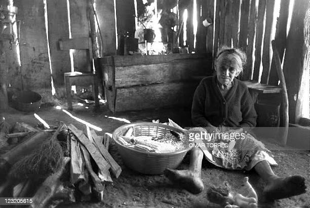 Rosario Lopez a Guatemalan refugee strips corn kernels from the cobs in her shack 15 January 1993 at this small refugee camp 5Km from the border with...