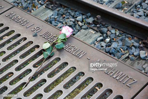 rose at memorial to the deportation of jews from berlin, gleis 17, grunewald station, berlin, germany - holocaust stock pictures, royalty-free photos & images