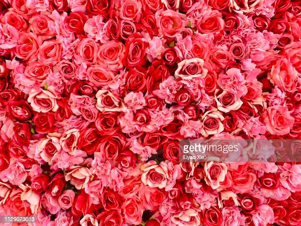 rose background - liyao xie stock pictures, royalty-free photos & images