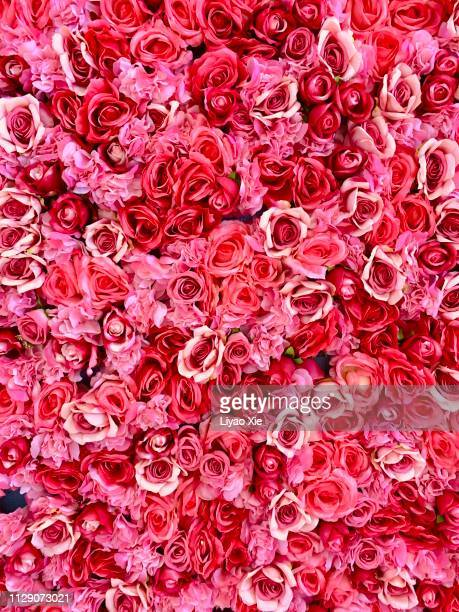 rose background - wedding background stock pictures, royalty-free photos & images
