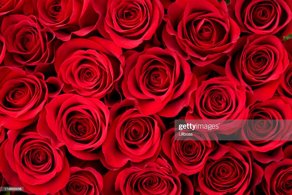 Rose Stock Pictures Royalty Free Photos Images Getty Images