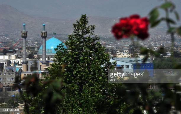 A rose blooms on a hill in Kabul on May 10 2012 Poverty and an ongoing insurgency by the ousted Taliban still pose a threat to the stability of the...