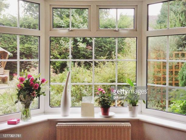rose bouquet and pot plants on bay window in a home - window stock pictures, royalty-free photos & images