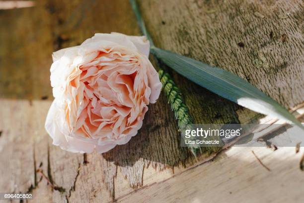 Rose Flower in Summer