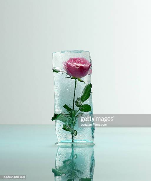 rose frozen in ice, close-up - 凍った ストックフォトと画像