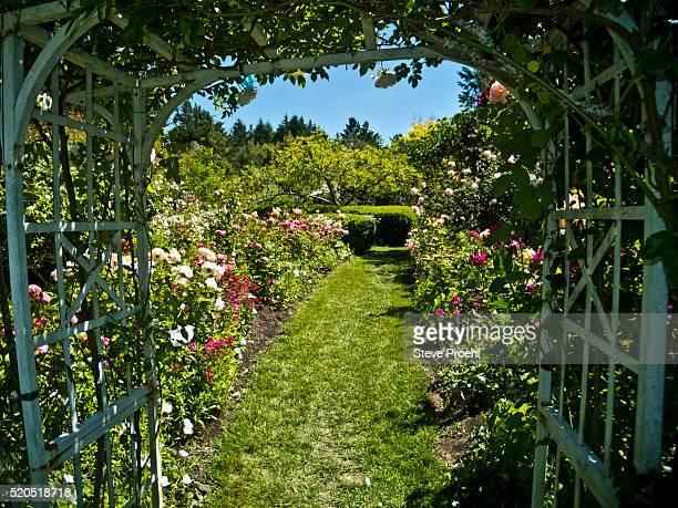 rose garden arbor - pergola photos et images de collection