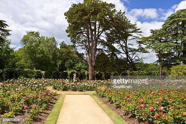 rose garden at blenheim palace, woodstock, oxfordshire, england, united kingdom. - blenheim palace stock pictures, royalty-free photos & images
