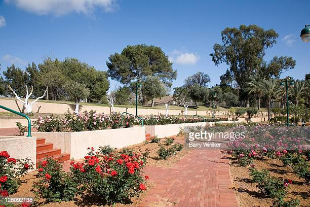 rose garden in bloom, spring, ra'anana park, israel - sharon plain stock pictures, royalty-free photos & images