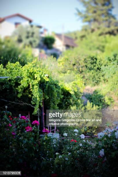 rose garden - gregoria gregoriou crowe fine art and creative photography. fotografías e imágenes de stock
