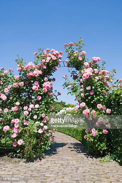 rose garden with blooming gate - arch stock pictures, royalty-free photos & images