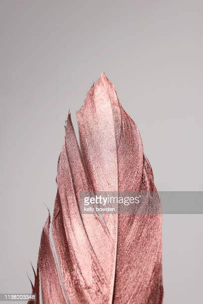 rose gold feather - ローズゴールド ストックフォトと画像