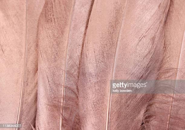 rose gold feathers background - ローズゴールド ストックフォトと画像