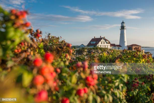 rose hip and portland head lighthouse - maine stock pictures, royalty-free photos & images