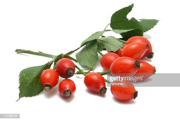 Rose Hip (isolated)