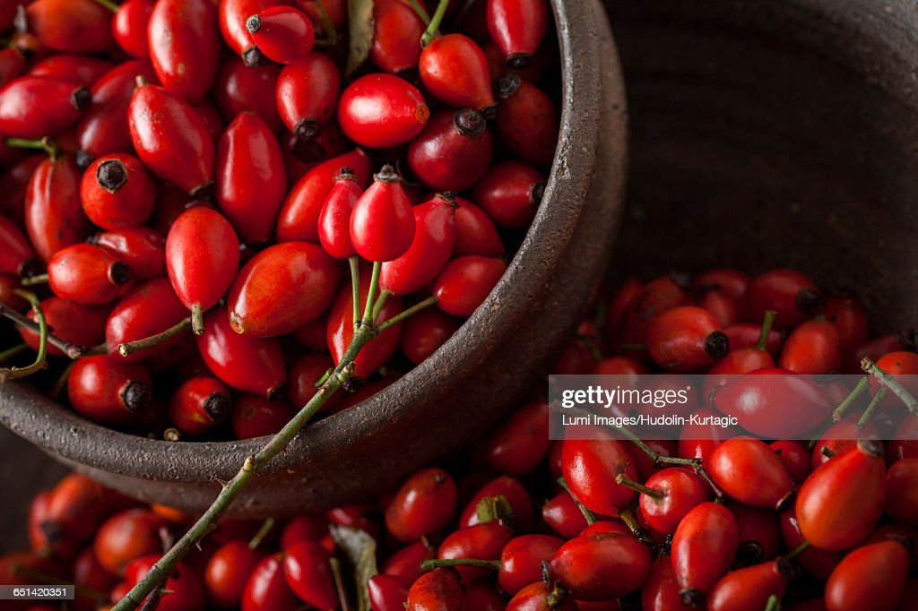 Rose hips of the dog rose : Stock Photo