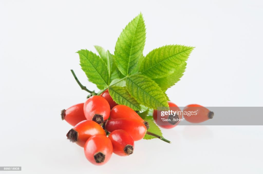 Rose hips with leaves : Stock-Foto