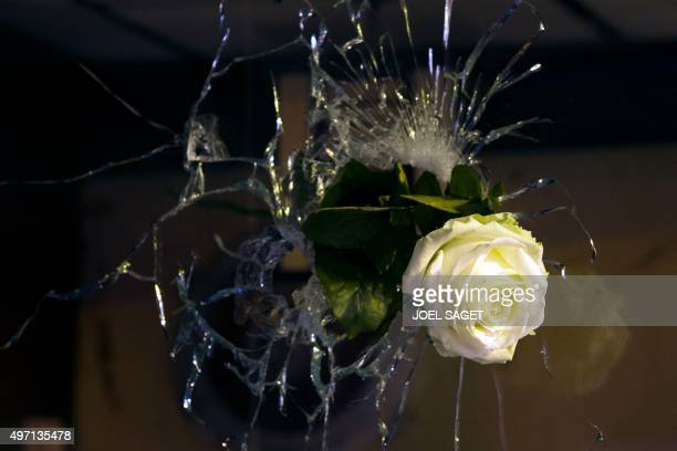A rose is pictured in a bullet hole in a window rue de Charonne in Paris on November 14 following a series of coordinated attacks in and around Paris...