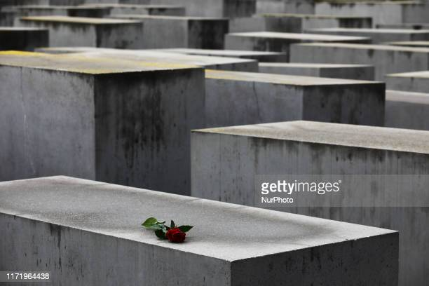 Rose is seen on the Holocaust Memorial, designed by Peter Eisenman, in Berlin, Germany on 25 September 2019.