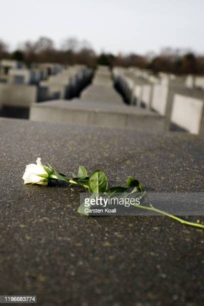 A rose lies on a concrete during a commemoration of the victims of the Holocaust at the Memorial to the Murdered Jews of Europe on the 75th...