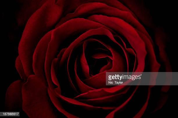 Rose Macro-XL