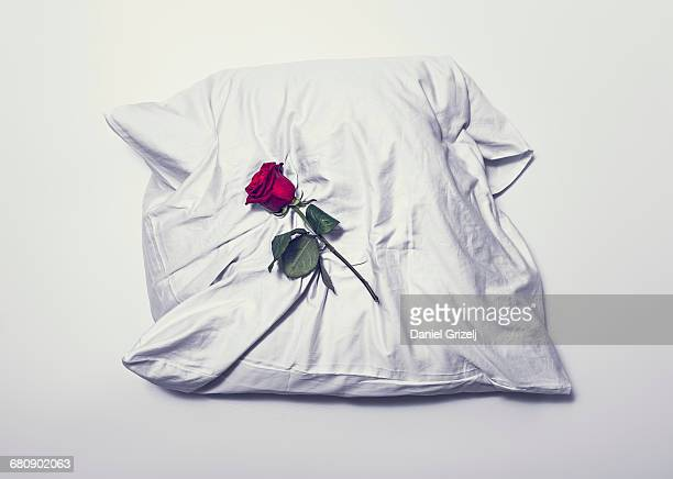 rose on a pillow