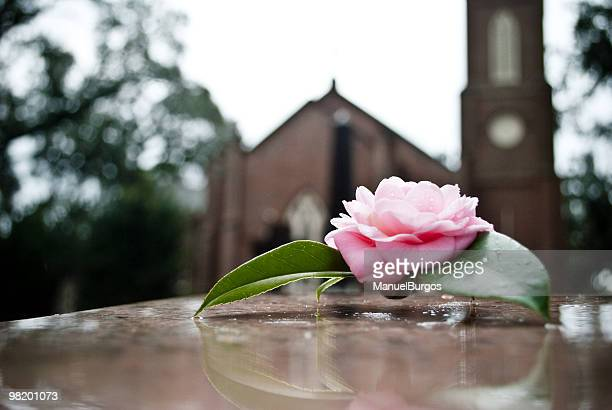 rose on grave - funeral stock pictures, royalty-free photos & images