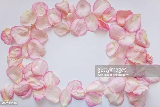 rose peatals frame on white, romantic background, peatals pattern, rose pink peatals, flower background