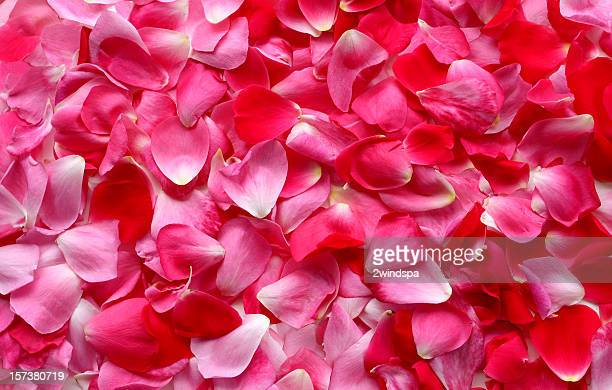 rose petal background - red roses stock pictures, royalty-free photos & images