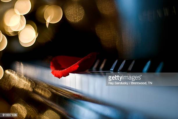 Rose Petal On Piano Keyboard with Light