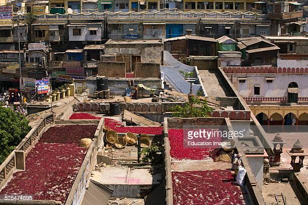 Rose Petals Are Dried On Roof Tops In Chandni Chowk Old Delhi India