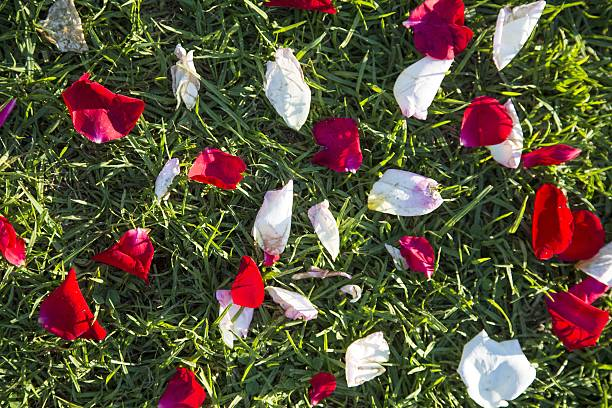 Rose Petals Pictures | Getty Images
