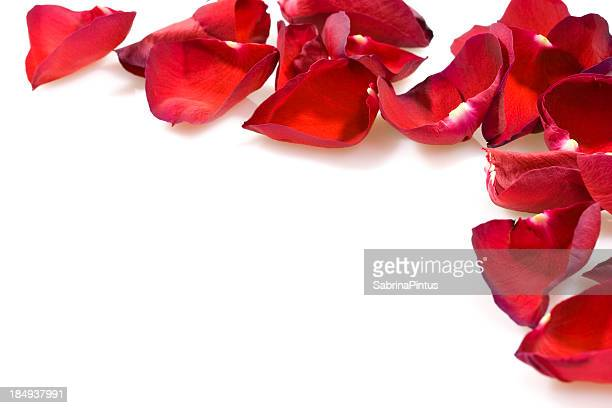 Rose petals in pattern on white