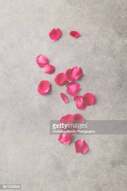 rose petals on gray background - rose petals stock pictures, royalty-free photos & images