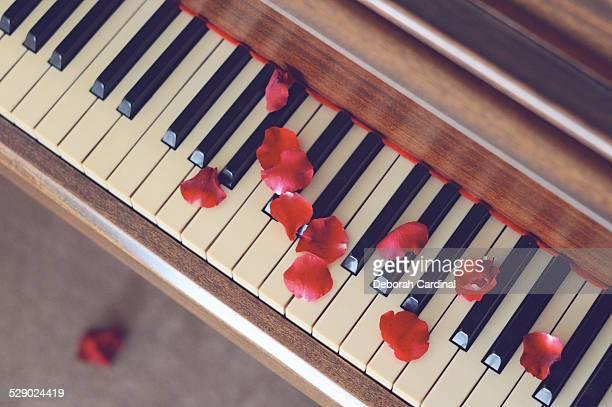 Rose Petals on Piano