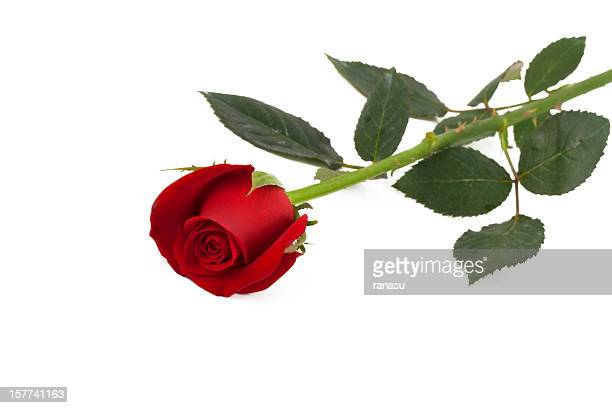 rose petals - sharp stock pictures, royalty-free photos & images