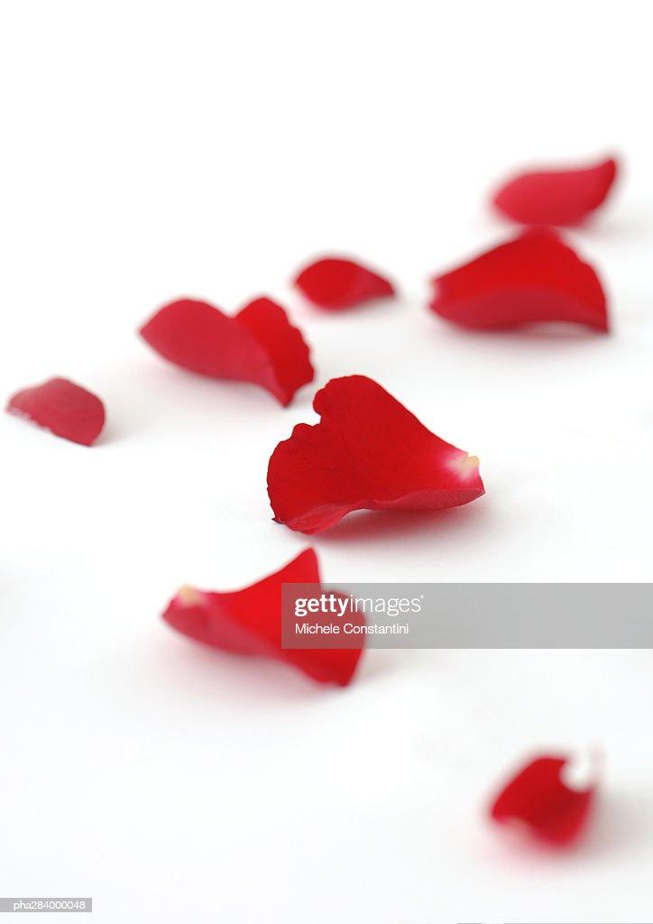 Rose petals : Stockfoto