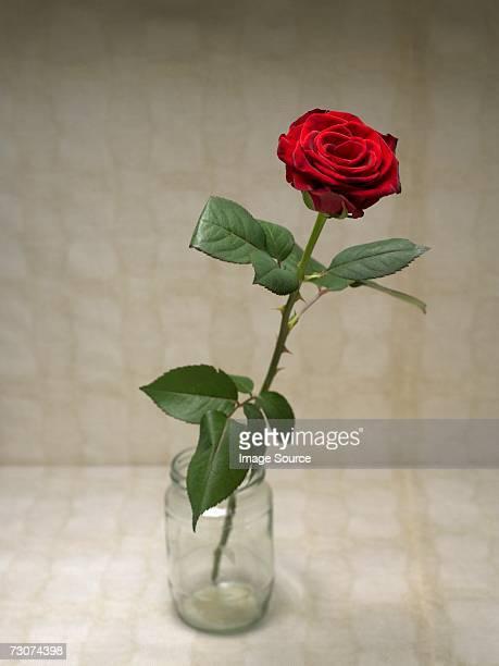 rose - espinho característica da planta - fotografias e filmes do acervo