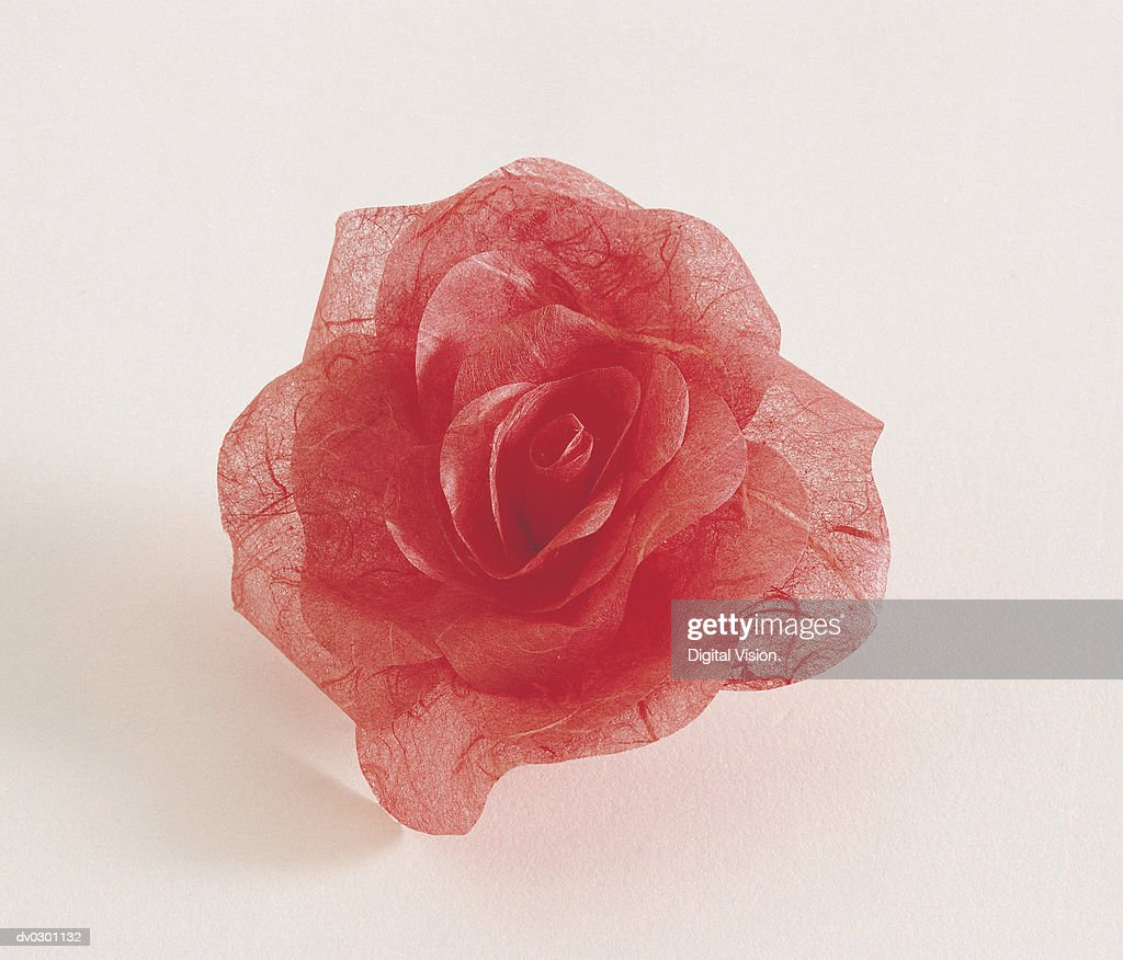 Rose Tissue Paper Stock Photo Getty Images