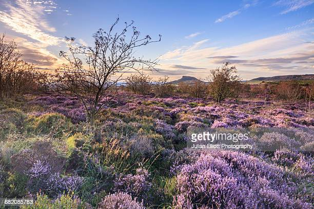 roseberry topping in the north york moors. - north yorkshire stock pictures, royalty-free photos & images