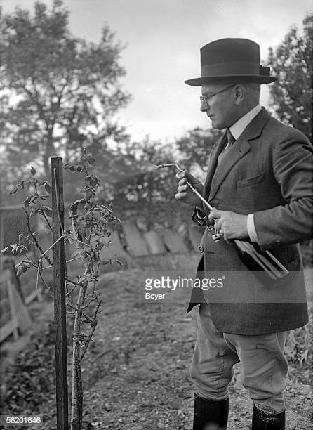 Rosebush care Spraying insecticides against aphids France 1928