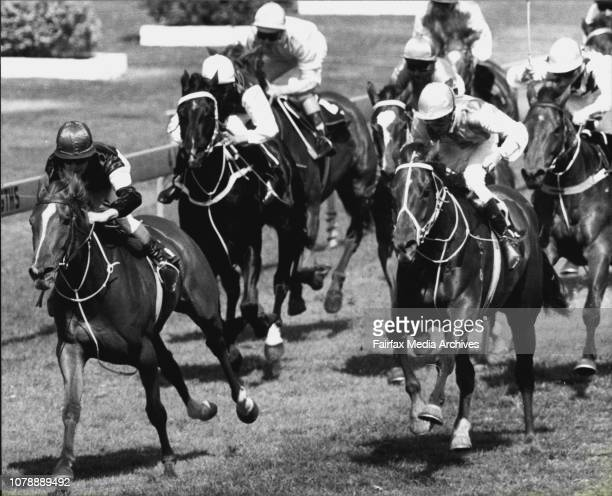 Rosehill Races Race 1 Carnivale '81 HcpFinish Flaming Echo September 12 1981