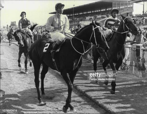 Rosehill Races Race 8 Comalco Aluminium HcpReturn to scale Heza Prince Ridden G Palmer December 13 1980