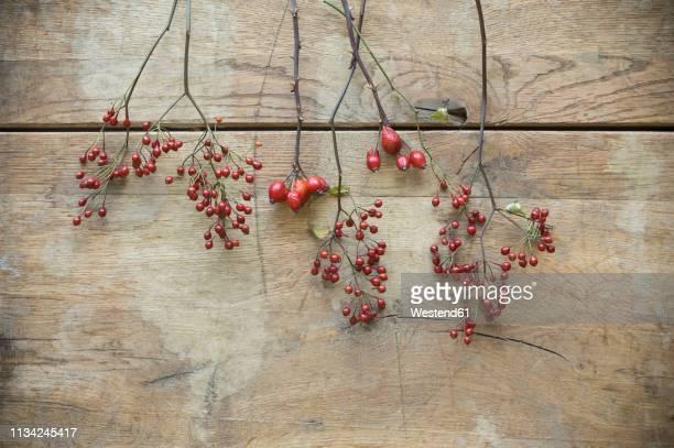 Rosehips on wood