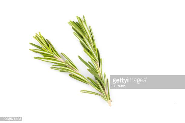 rosemary herb close up isolated on white background - ローズマリー ストックフォトと画像
