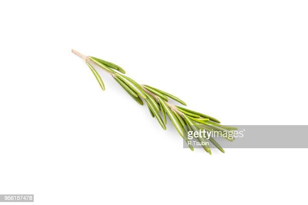 rosemary herb close up isolated on white background - twijg stockfoto's en -beelden