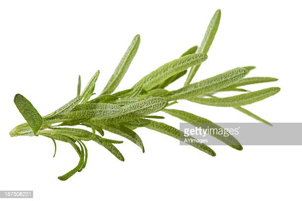 Rosemary on white