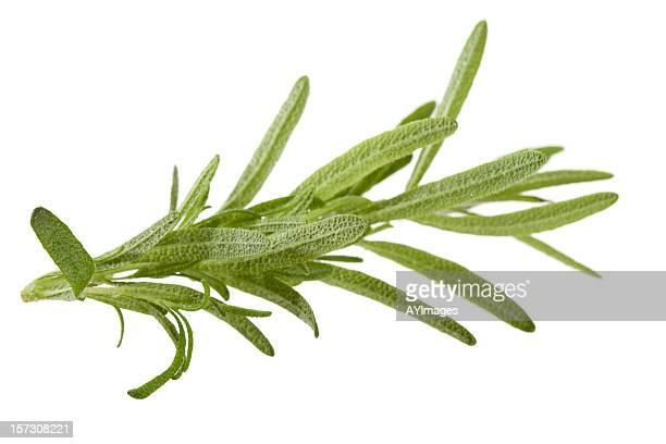 Rosemary em branco