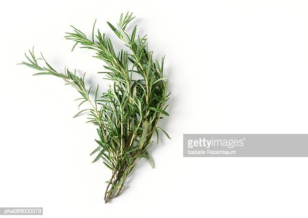 rosemary - spice stock pictures, royalty-free photos & images