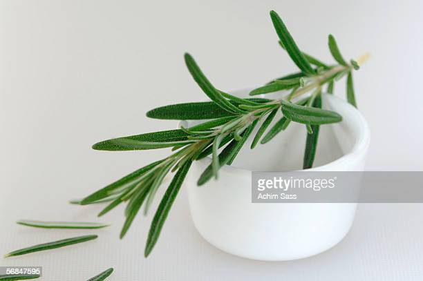 Rosemary twig on cup, close-up